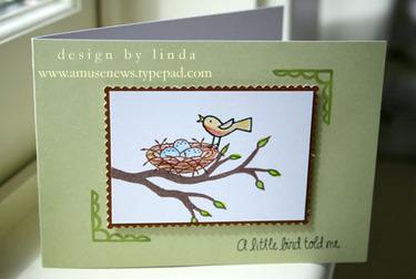 Songbird_egg_nest_2